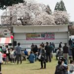 第27回沼田公園桜まつりが開催されました。